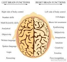 Which Part Of The Brain Consists Of Two Hemispheres What Is The Splenium With Pictures