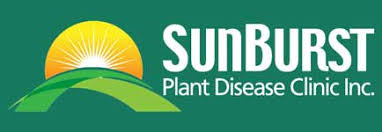 Plant Disease Diagnosis - strawberry plant disease diagnosis strawberry plants org