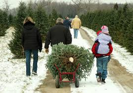 buying a christmas tree read this first marketwatch