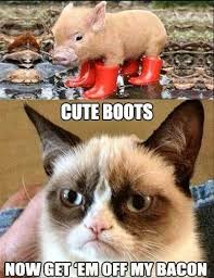 Funny Cute Animal Memes - bacon boots crazy as a bag of hammers humor funny lol memes