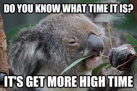 High Koala Meme - high koala memes quickmeme