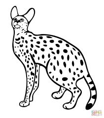 image gallery serval wildcat