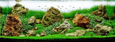 Aquascape Aquarium Designs Home Accessories Inspiring Aquascape Designs With Artificial Lawn