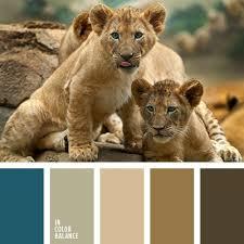 591 images colour peacocks color