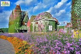 miracle garden dubai world love flowers