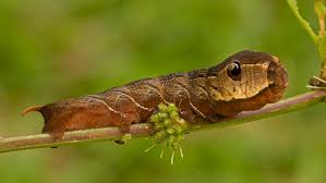 growing more butterflies in south east queensland gecko hills to nationalgeographic 1457882a adapt 1900 1 jpg