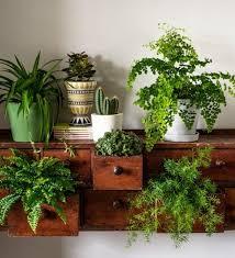 beautiful house plants gorgeous design beautiful indoor plants ideas best ideas about