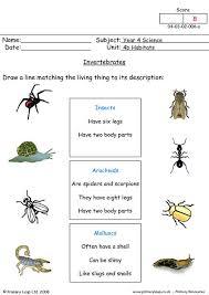 invertebrates worksheets worksheets