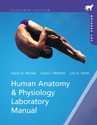 What Is Human Anatomy And Physiology 1 Marieb U0026 Smith Human Anatomy U0026 Physiology Laboratory Manual Cat