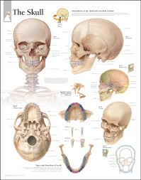 Ear Anatomy And Function Inside Nose Anatomy Images Learn Human Anatomy Image