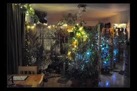 indoor garden christmas 2010 by forestina fotos on deviantart