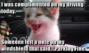 cat drives fine i can has cheezburger funny cats cat meme
