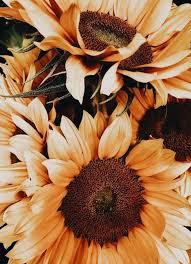 pin by susana rivera solorzano on o pinterest sunflower flower