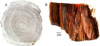 Wooden Table Surface Perspective Png Geosciences Free Full Text Origin Of Petrified Wood Color