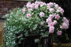 the garden plants for all seasons interior decoration ideas