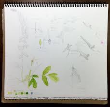 idaho native plant society american native plant aislinn adams
