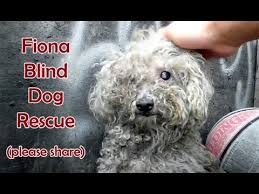 Pictures Of Blind Dogs Blind Dog Rescue Fiona Please Share On Fb U0026 Twitter And Help Us