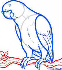 how to draw a parrot pencil art drawing