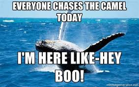 Whale Meme - wilmore home decor on twitter humpday camel whale meme