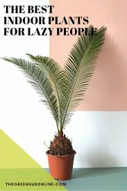 Best Inside Plants The Best Indoor Plants For Lazy People The Green Hub