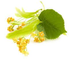 linden flower linden lime blossom fragrance gracefruit