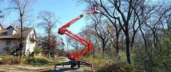 tree removal service wi trimming near me arborist