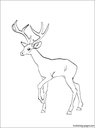 free coloring deer coloring pages