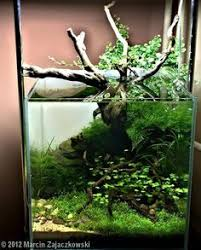 Aquascape Fish Http Media Cache Ec0 Pinimg Com Originals 16 F4 D0