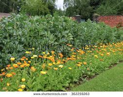 miniature victorian greenhouses vegetable garden rural stock photo