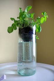 Wine Bottle Planters by 18 Best Sub Irrigated Planters Sips Images On Pinterest Wine
