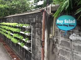 Urban Wall Garden - urban garden in bangkok update corrente
