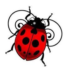 ladybug sketch google keresés katica pinterest ladybug