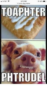 Funny Meme Dog - at t 66 511 pm a funny dog meme toaphter phtrudel funny meme on