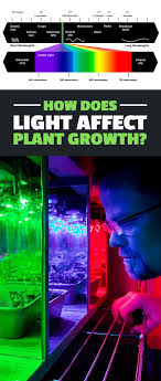 how does light affect plant growth how does light affect plant growth plant growth plants and lights