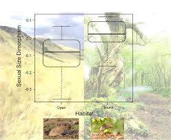 selection habitat preference and the evolution of sexual size