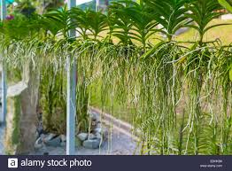 native hawaiian plant nursery national tropical botanical ga stock photos u0026 national tropical