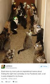 Funny Cat Meme - 15 funny tweets about cats bored panda