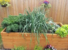 autumn winter small vegetable garden rocket gardens garden trends