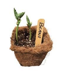 54 coco fiber seed starter biodegradable pots 3 5 u201d square pots