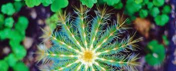 cactus sale buy cactus cactus doctor