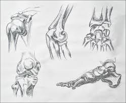 Dog Body Parts Anatomy Dogs And Bones Irina Sztukowski Fine Art