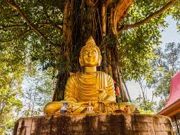 buddha image bodhi tree stock image image of religion