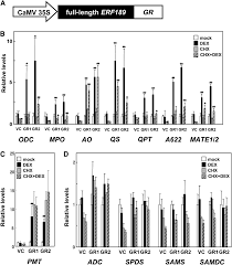 square root of 289 clustered transcription factor genes regulate nicotine