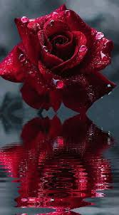 1167 best rose animation images on pinterest animation gifs