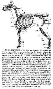 Dog Anatomy Front Leg Oricom Technologies Animal Anatomy