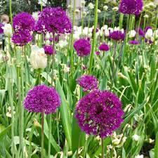 Prospect Park Botanical Garden Botanic Garden Check Availability 2709 Photos 648