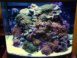 Reef Aquarium Lighting Nano Reef Tank 5 Things You Need To Know Aquariumstoredepot