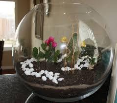 transporting terrariums darling element