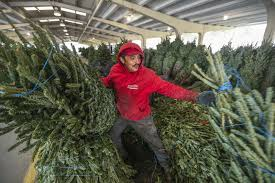 follow these tips to be sure your tree stays fresh longer