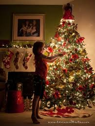 best 25 tree pictures ideas on